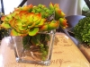 fleur-cactus.jpg